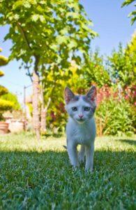 Feline Leukemia Virus in Charlottesville, VA